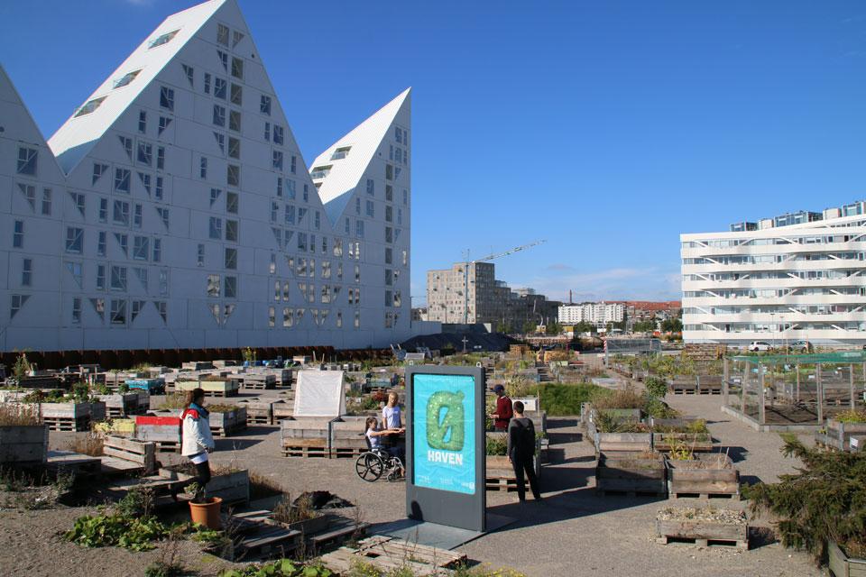 Urban gardening Aarhus Denmark