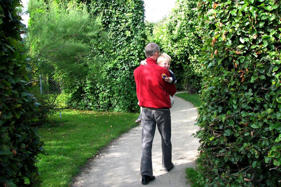 Bьющиеся растения-лианы. Ботанический сад Орхус