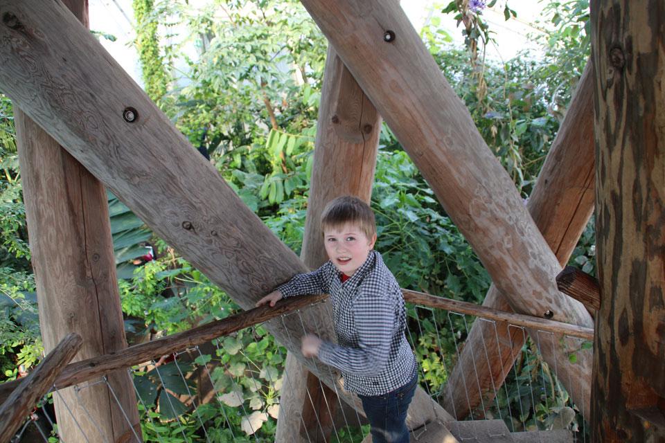 В тропическом куполе теплиц ботанического сада