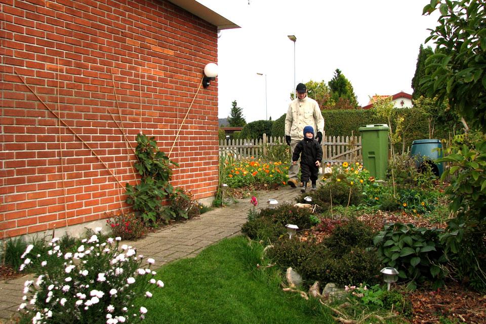 Посадила инжир около стены дома. Фото 17 окт.2010. Мой сад, Дания