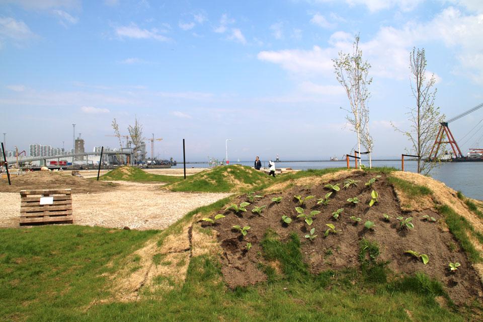 Травяные купола с хостой в городском парке - пермакультур