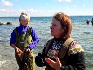 Сбор морских водорослей – масте класс