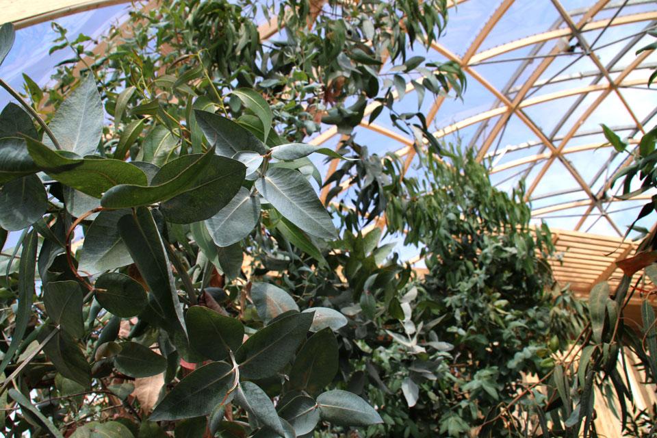 Купол Видения в Орхусе - Зимний сад