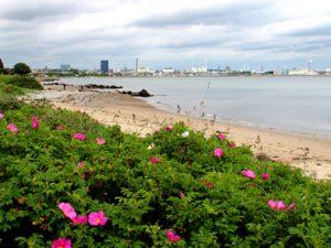 Борьба с инвазивными растениями в Дании