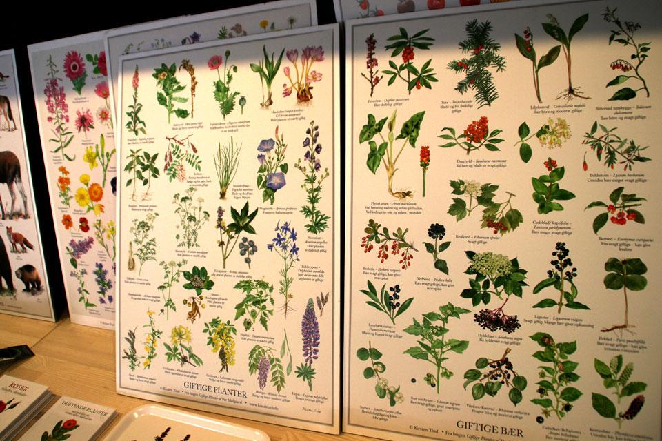 Плакат с ядовитыми ягодами растений