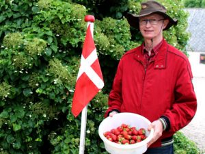 Самосбор клубники в Дании