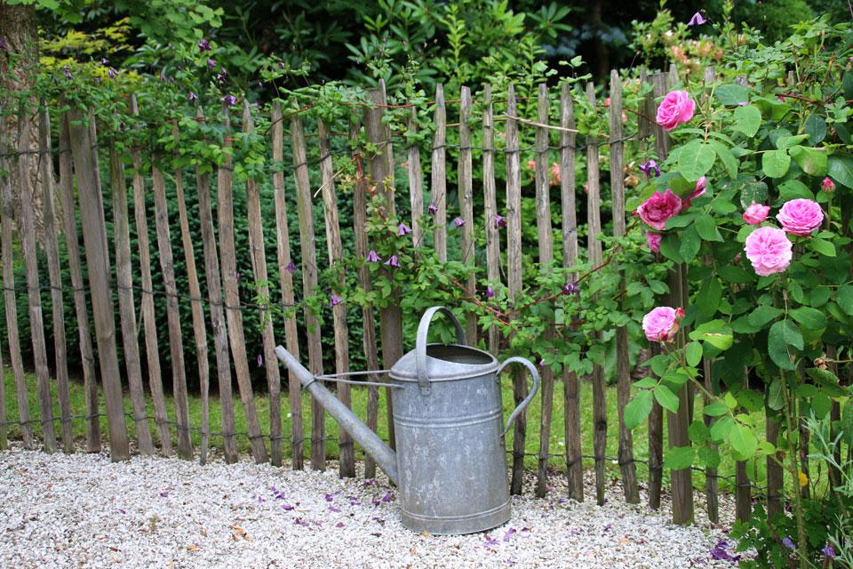 Изгородь с розами и клематисом.