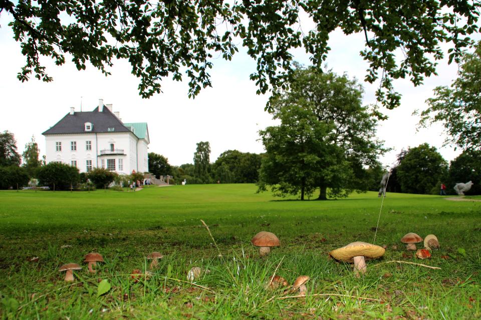Белые грибы растут на газоне возле королевского дворца Марселисборг