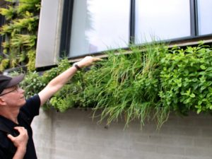Вертикальный сад Майлгэде Орхус