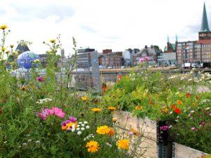 Городские огороды около Купола Видения август 17