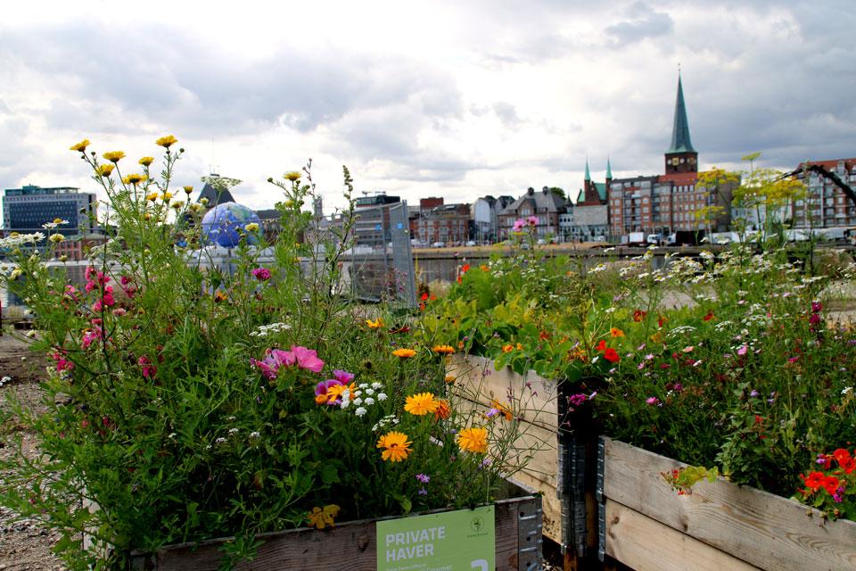 Хозяева этого огорода - любители цветов