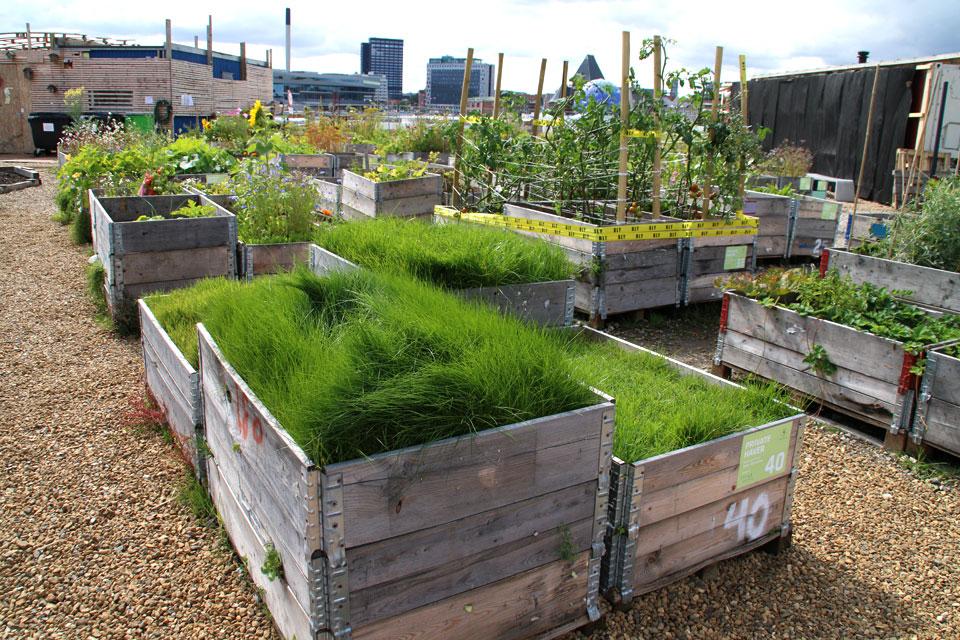 Хозяева этого огорода засадили огород газонной травой