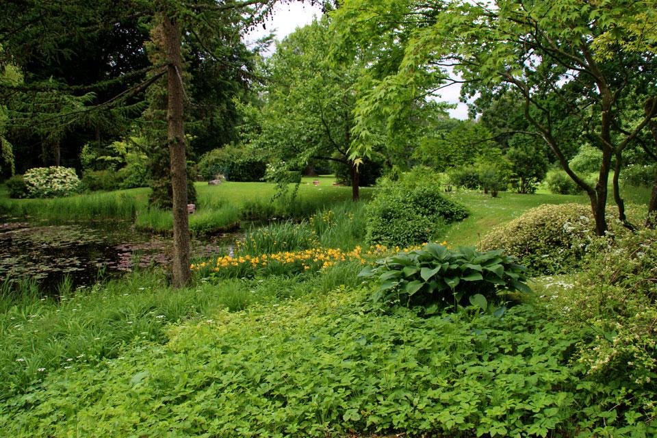 самые обычные растения датской природы