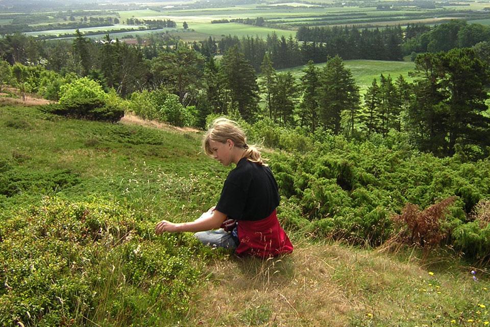 Кустики черники обыкновенной на вересковых холмах