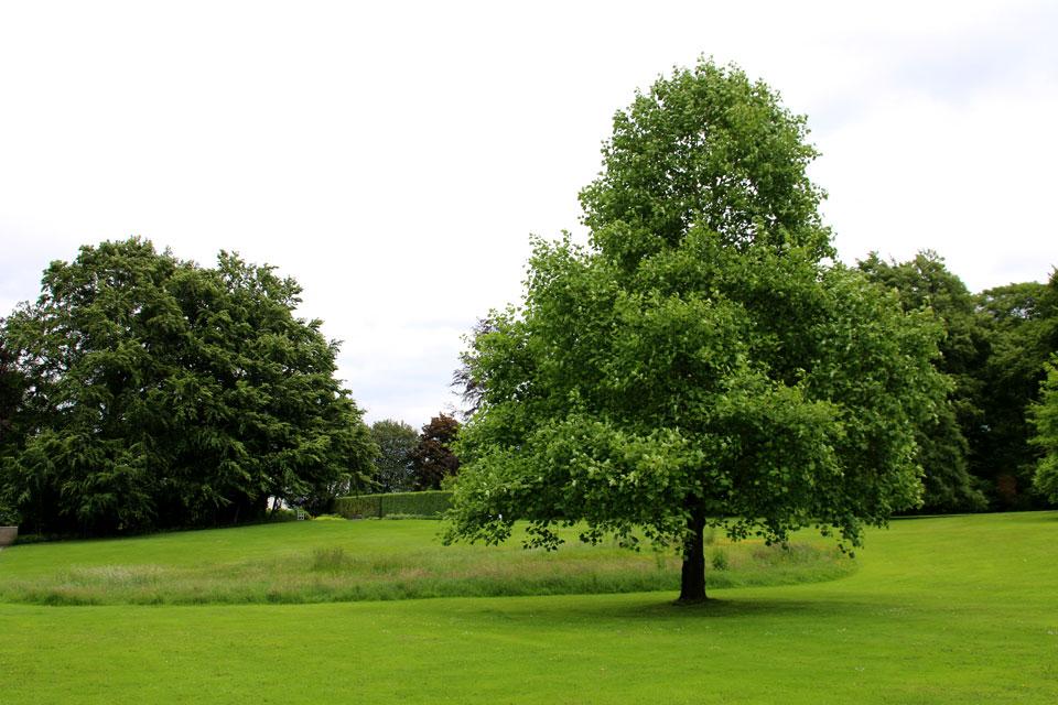 В королевском парке Марселисборг часть газона в округлой форме не скашивается