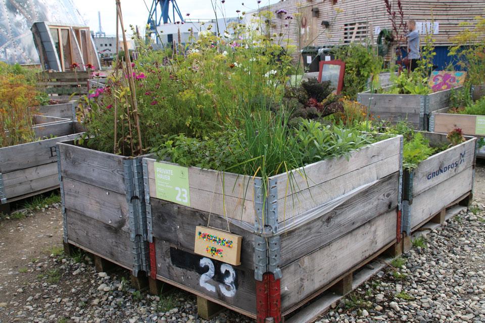 цветы и зелень: лук, мята, укроп, шалфей