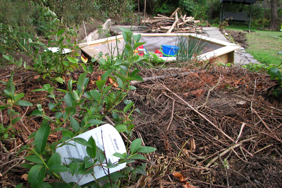 кусты голубики на новом вересковом участке