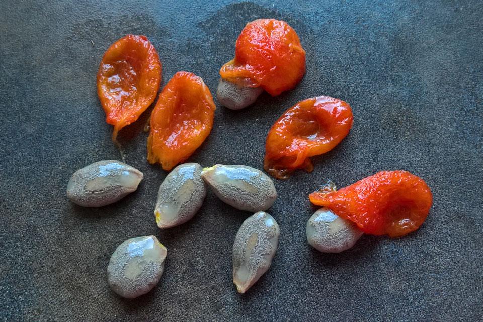 Семена трихозанта змеевидного