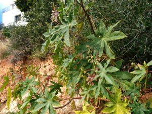Дикорастущие растения юга Испании