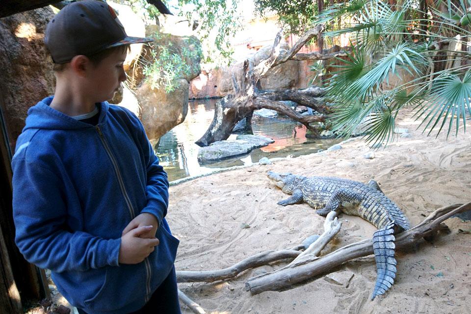 Нильский крокодил Crocodylus niloticus