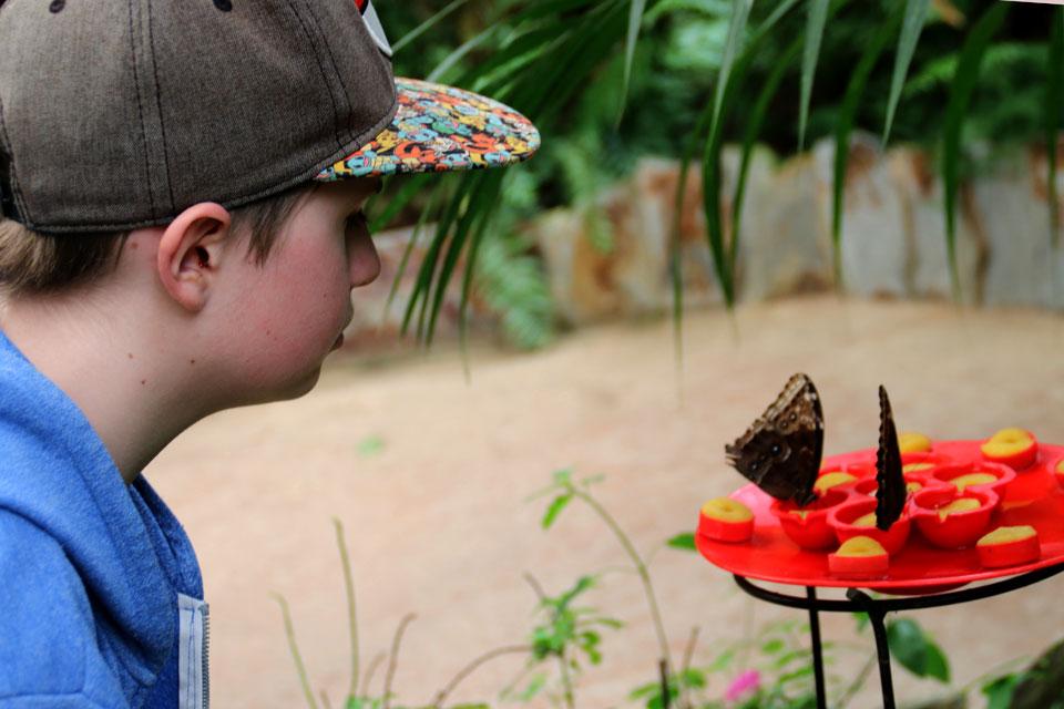 Кормушка для бабочек