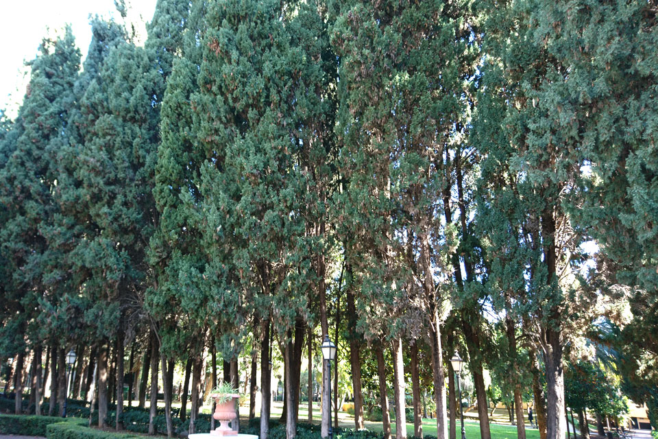 Парк Конституции Марбелья, Испания