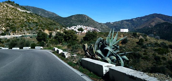 Растения в горах на юге Испании agava Ojen www.florapassionis.com