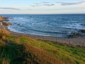 Растения побережья Средиземного моря Испании