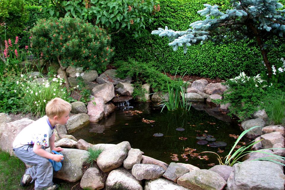 В этом водоем мой сын обнаружил карпов, что его особенно заинтересовало
