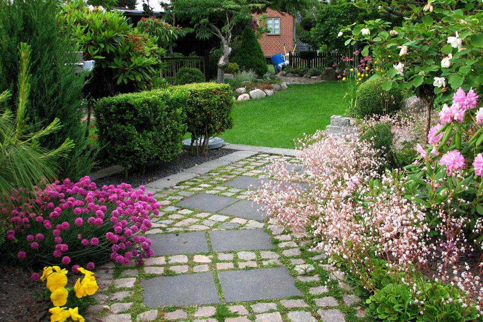 Магнолия Зибольда (Magnolia sieboldii) на фото справа.