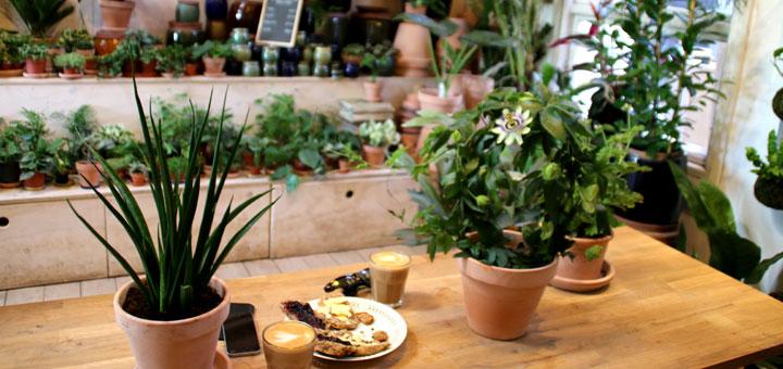 Цветочное кафе flower cafe