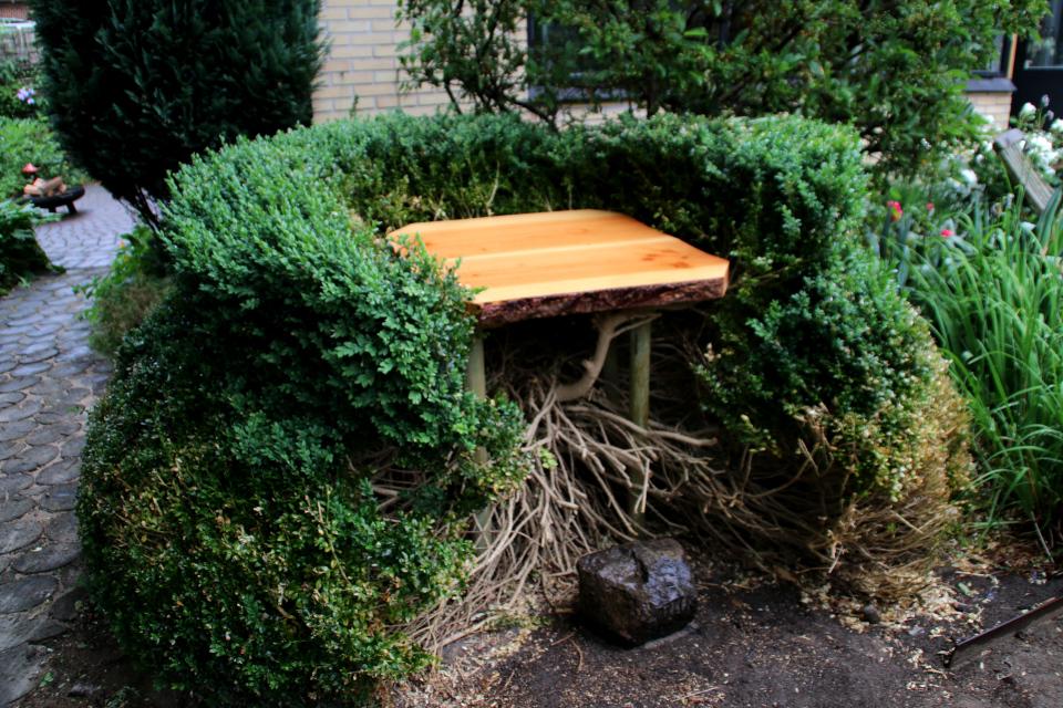 Новая идея стриженной формы из самшита. Фото 10 июн. 2018, сад Йорк, г. Орхус, Дания