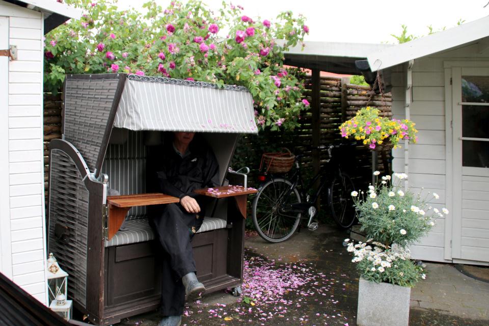Пляжная корзина - кабинка с навесом возле цветущего куста роз в саду Йорк