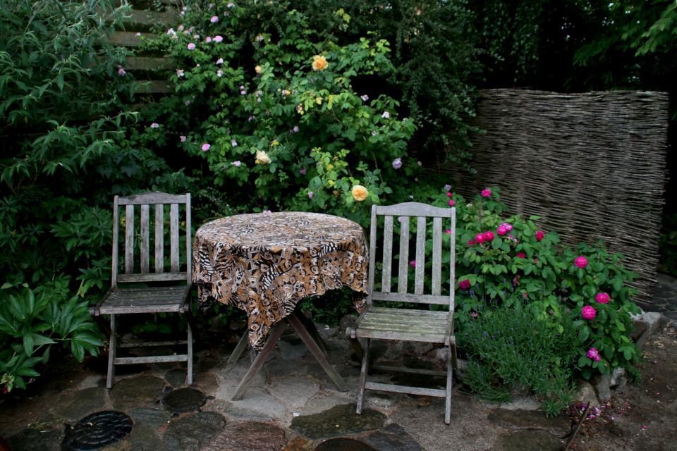 Розовый уголок в саду Йорк. Фото 10 июн. 2018, г. Орхус, Дания