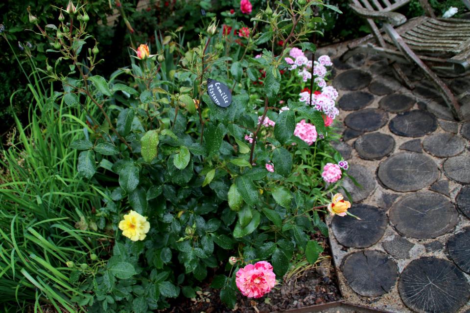 Таблички с указанием сортов роз, сад Йорк