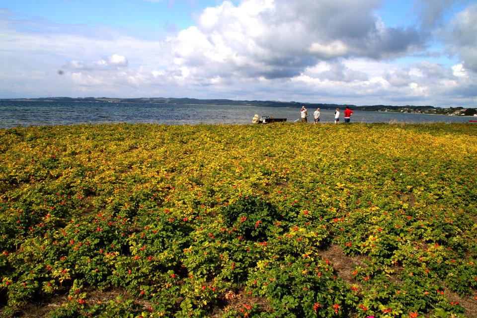 берег, возле которого проходит маршрут маргариток