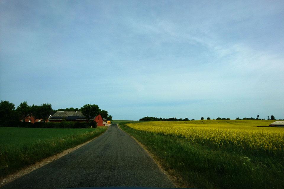 Дороги маргариток проходят через маленькие поселки и поля.
