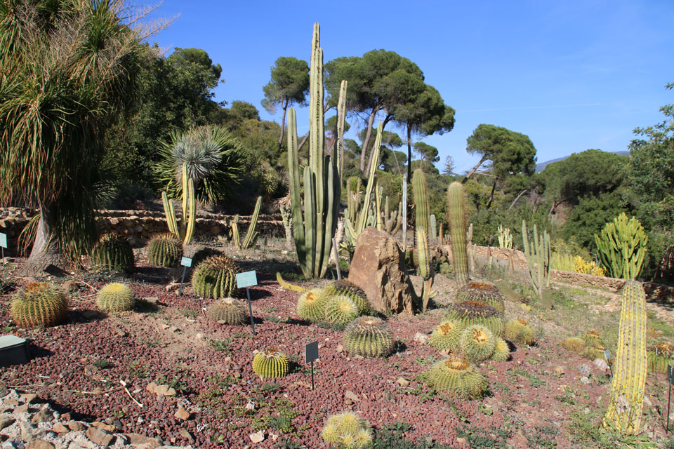 Коллекция кактусов и суккулентов ботанический сад Ла Консепсьон