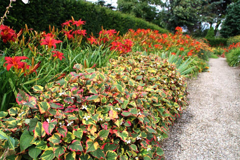 Сад многолетних цветов Харлев