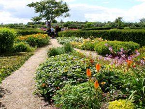 Сад многолетних цветов
