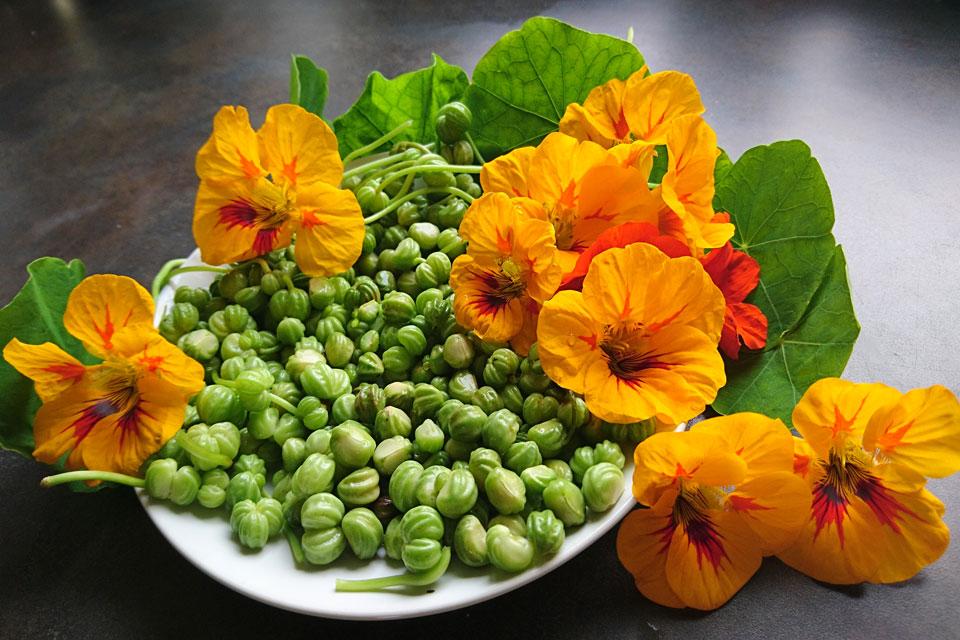 Цветки и плоды настурции