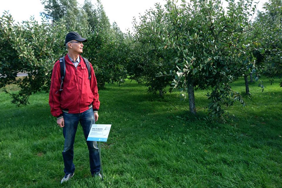 Плантация с яблонями, грушами и сливами