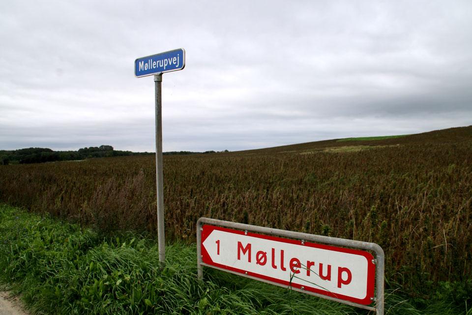 Конопляные поля поместья Мёллеруп
