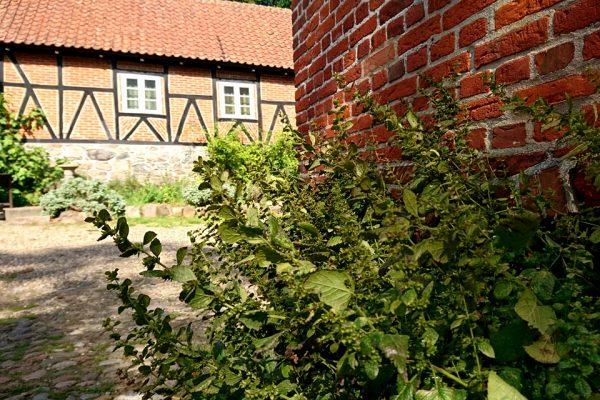 Мелисса лекарственная семена melissa-officinalis-seeds Hald Hovedgaard 6aug18 www.florapassionis.com