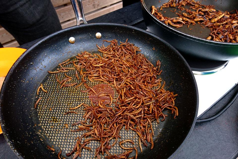андидаты для альтернативы мяса - это кузнечики и мучнистые жуки