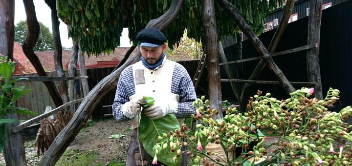 Табачное производство в старые времена в Дании tobacco production denmark old city aarhus www.florapassionis.com