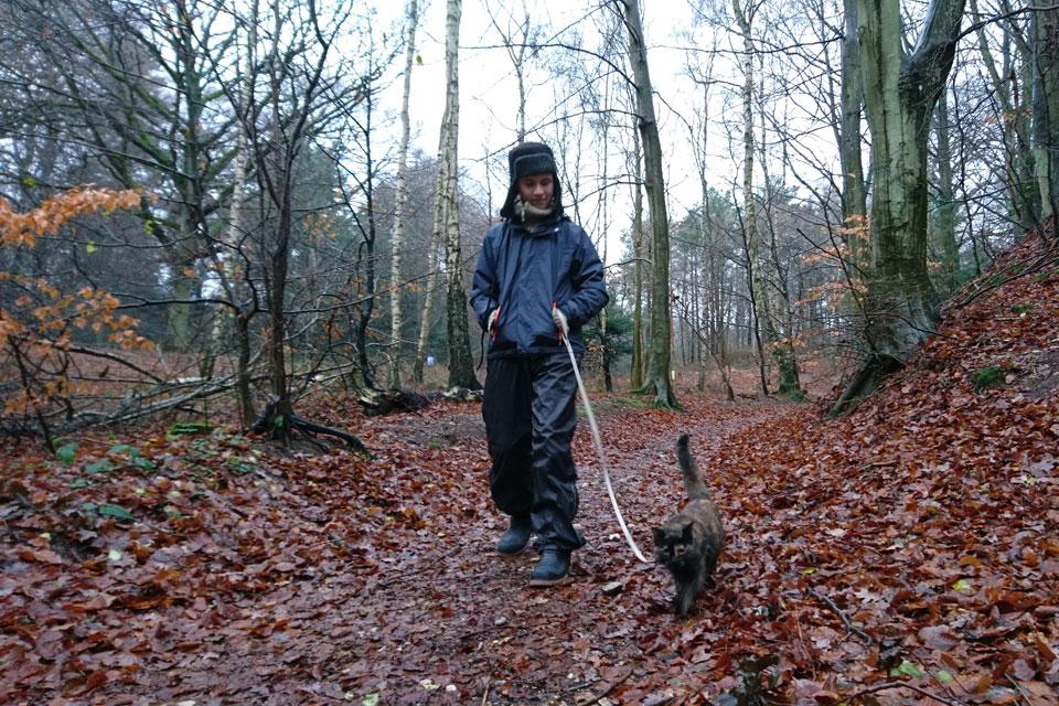 Гуляя по лесу с кошкой, мы способствуем распространению семян подмаренника