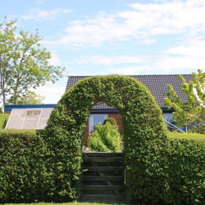 Бирючина обыкновенная Ligustrum vulgare 11maj18 tilst www.florapassionis.com