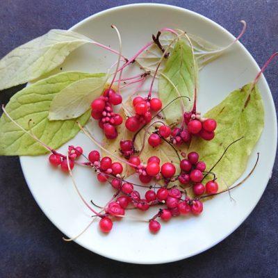 Лимонник китайский Schisandra chinensis 11018 my garden www.florapassionis.com