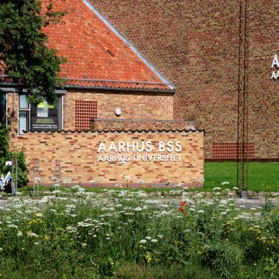 Морковь дикая, или морковник Daucus carota Aarhus 26jul17 www.florapassionis.com
